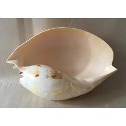 Melo Amphora 24/28cm lot of 1