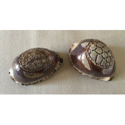 Engraved Turtle Arabica 6cm lot of 12