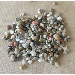 Mini coquilles perforées lot de 500grs