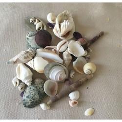 Mélange de petits coquillages 1à4cm par 2kg