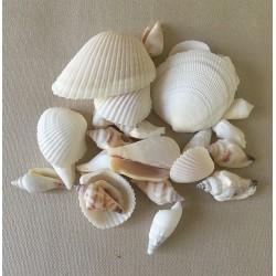 Mix of white seashells