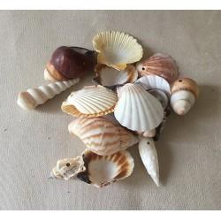 Mélange de coquillages perforés 2/5cm au kilo