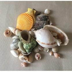 0072 MIXED SEA SHELLS 3/9cm per 2 kg