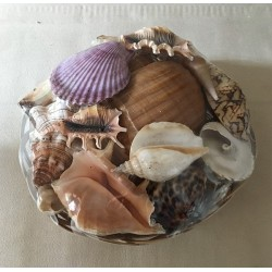 25cm basket filled with large shells matched by 6