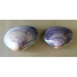 Clam Violet 5/6cm by 12