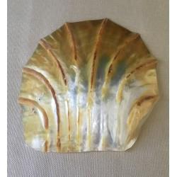 Huître Perlière Sculptée polie 15/17cm par 3