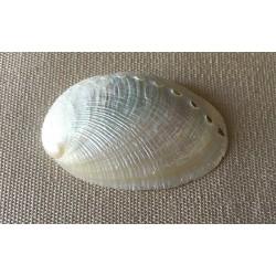 Abalone Round Nacrée 4/5cm by 50