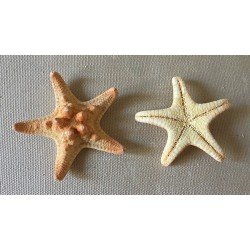 Mini Star Natural Rhino lot of 100