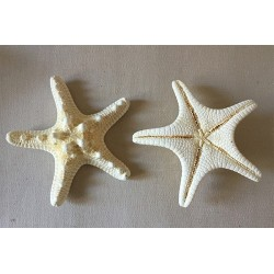 Star of the Sea Rhino Blanchie 10/13cm lot of 25