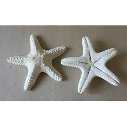 0825 STAR FISH JUNGLE WHITE 10/13cm per 25