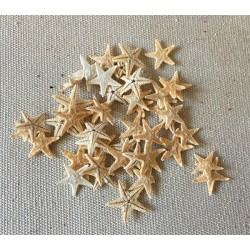 Star of Sea Plate Mini 1/1.5cm lot of 1000