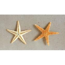 0830 STARFISH FLAT per 1000