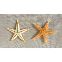 Star of Sea Plate 7/10cm lot of 100