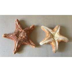 Wax Star 15/20cm lot of 6