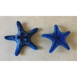 Blue Colored Rhino Sea Star 5/7cm lot of 100