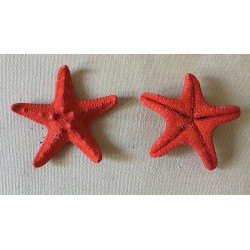Red-colored Rhino starfish 5/7cm lot of 100