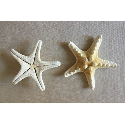 Star of the Sea Rhino White 5/7cm lot of 100