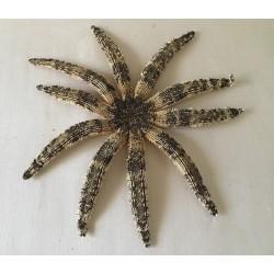 Etoile Luididae 44/50cm lot de 2