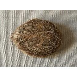 Oursin Croix Planulata lot de 6