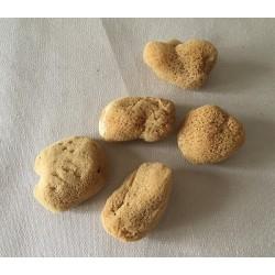Deco sponge 4cm batch of 12