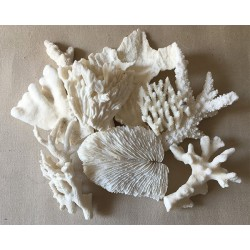 Coral block 20/30cm matched per kilo (about 2 Pieces/kilo)
