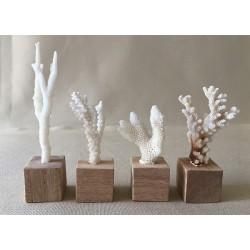 Minis coraux sur socle 8/10cm lot de 6