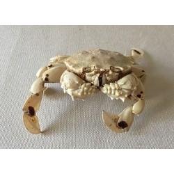 Lunaris crab 9/10cm lot of 2
