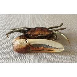 Crabe Violoniste 6/8cm lot de 3