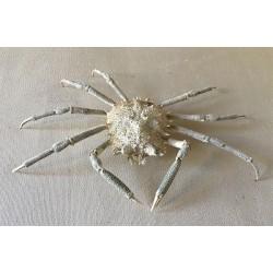 Crabe Tide 17/18cm lot de 2