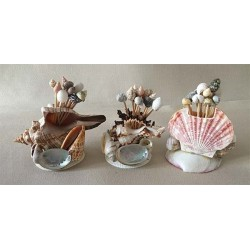 1086 TOOTH PICKS IN SEA SHELLS ASSORTED per 24