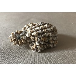 Turtle in Mini Shells 7/7.5cm lot of 24