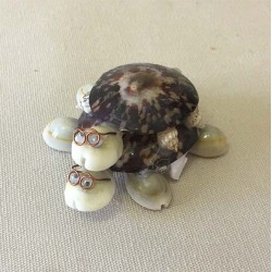 Turtle Double Patelle 7cm lot of 12