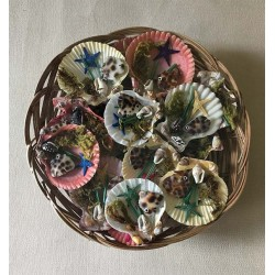 Magnets Pecten Deco Sea in basket lot of 25