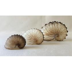 Argonaute Hians 5/7cm par 3