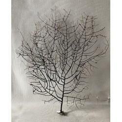 Gorgone noire dentelle 16/20cm ( 6'' - 8'' ) par 6