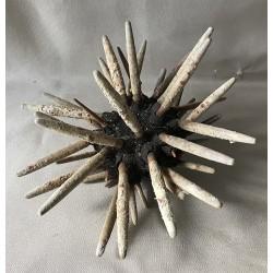 Oursin Crayon Geant 19/24cm lot de 2