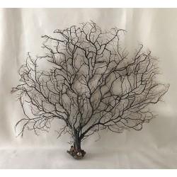 """Gorgone arbre noire 23/30cm (10-14"""") par 3"""