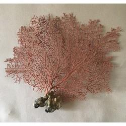 """Gorgone dentelle rouge 25/30cm (10-14"""") par 3"""