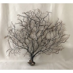 3317 BLACK SEA FAN 49/62cm per 1