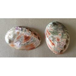 Abalone rufescens 8/9cm par 12