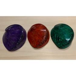 Abalone rufescens couleurs assorties 13/15cm par 3