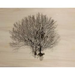 "Gorgone dentelle noire 25/35cm (10-12"") lot de 3"