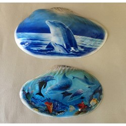 Clam mother-of-pearl Deco sea 24/26cm 2 models by 3