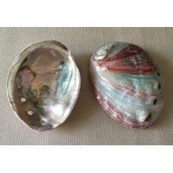 Abalone Pink 10cm by 12