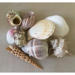 Mix large shells 5/9cm 2kg lot