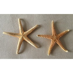 Sea Star Surigao 11/14cm lot of 3