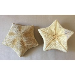 Star of Sea Coussin 20/25cm lot of 3