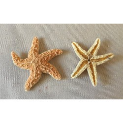 Star of Sea Sugar 2.5/5cm lot of 50