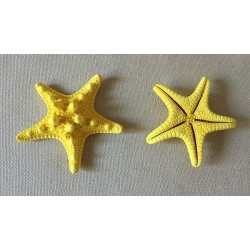 Star of Sea Rhino Colored Yellow 5/7cm lot of 100