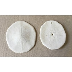 """Dollar test of the """"BISCUIT"""" Sands 9/10cm lot of 12"""